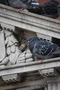 pigeons in boston common