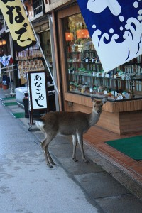 a deer wanders around the market on miyajima island
